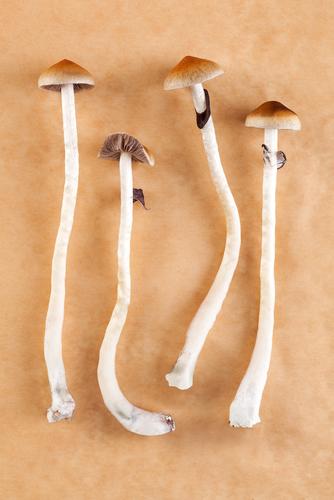 Mushrooms Addiction